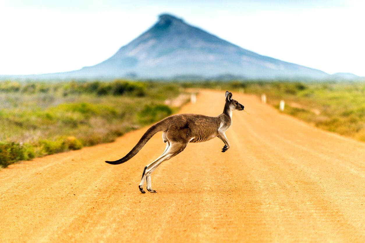 Ubezpieczenie do Australii – co musisz o nim wiedzieć?